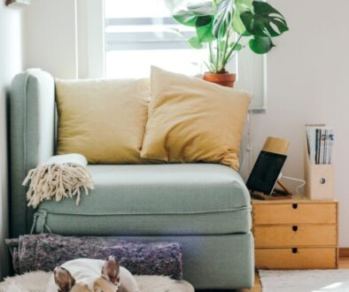 interior design of a lovely living room with a dog lying on a cushion