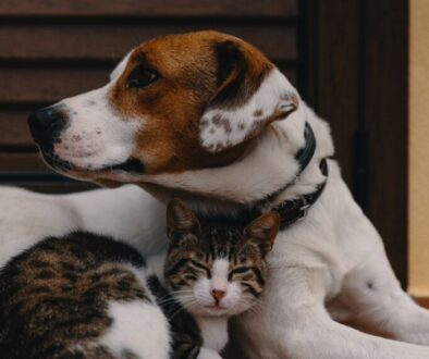 Dog and Cat who are friends