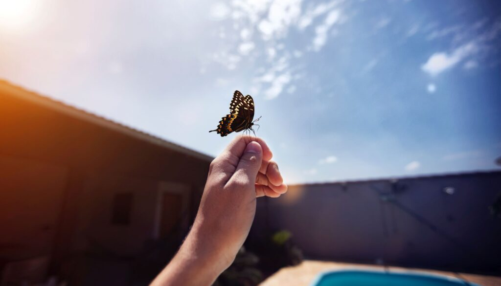 hand holding a butterfly outside by a pool