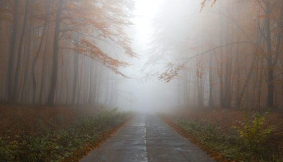 mysterious picture of a long straight road through a lonely woods disappearing into the fog